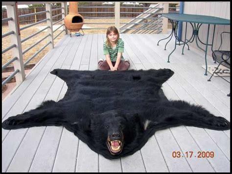 What Can I Expect For A Bear Mount Cost