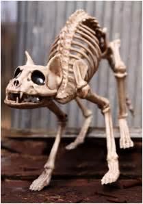 cat bones skeleton cat