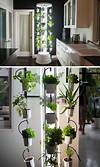 Indoor Kitchen Garden Ideas Sitting-room Herb Wall Small indoor vegetable garden ideas