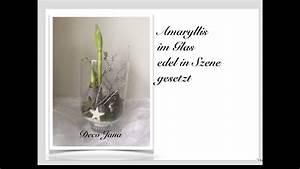 Amaryllis Im Glas : diy weihnachtsdeko amaryllis im glas edel in szene gesetzt deko jana youtube ~ Eleganceandgraceweddings.com Haus und Dekorationen