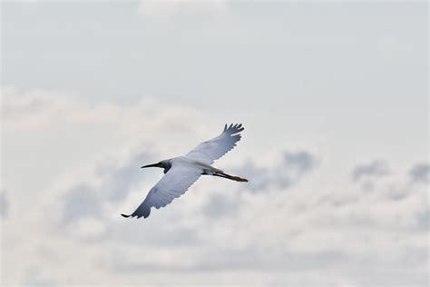 do birds fly at 28 best do birds fly at how do birds fly 171 engineering 171 cambridge core blog bird fly