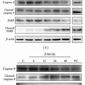 (PDF) Potential Therapeutic Role of Z-Isochaihulactone in ...