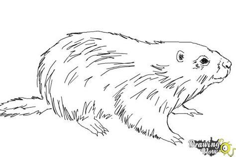 draw  groundhog drawingnow