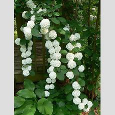 Landscaping And Outdoor Building , The Best Climbing Plant