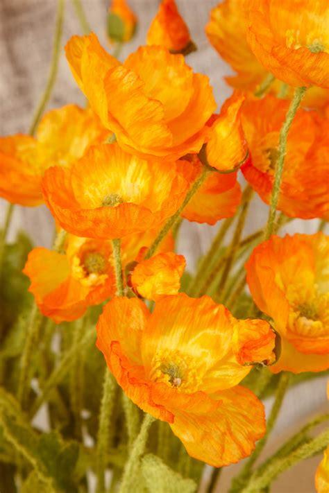 orange poppy flowers silk flowers