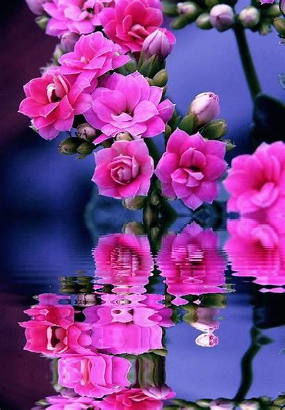 Gifs Centerblog Flores Flowers Flower Fleurs Animated