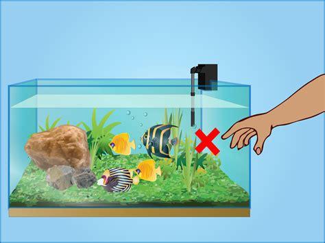 care   fish tanks  steps
