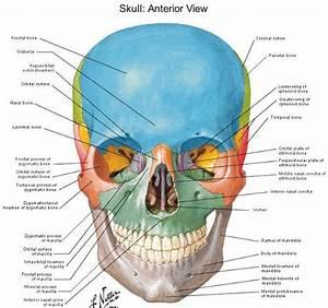 Skull Landmarks