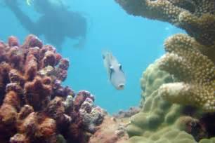 Kauai Poipu Beach Snorkeling