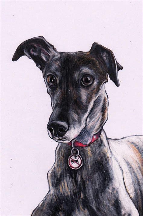 foto de Whippet drawing Custom pet art by Jim Griffiths https