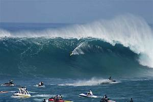 Surfers In Shark Attack