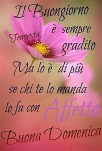 Buongiorno #fiori# Buona domenica Buongiorno♣ Buonanotte