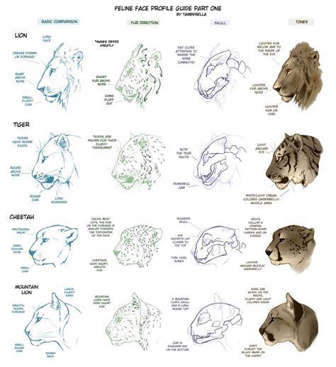 feline face profile tutorial   tamberella