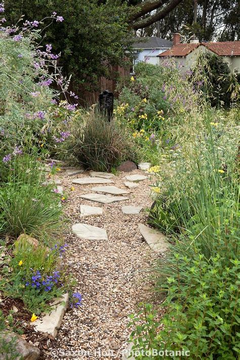 plants front yard california native plants front yard gardens and gravel path on pinterest