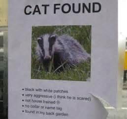 found a cat badger badger badger part 2 i science