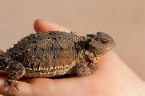 Best Pet Reptiles Lizards