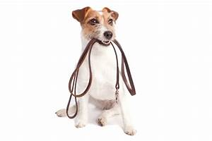 Dog walking noahs ark pets for Puppy dog walker