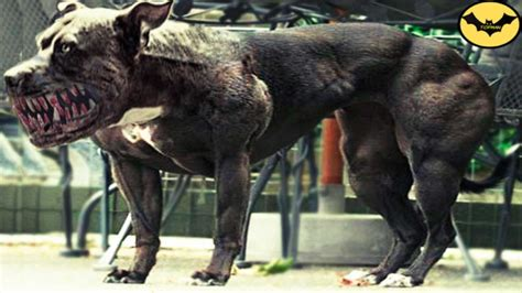 Top 5 Most Dangerous Hybrid Dogs Breeds In The World