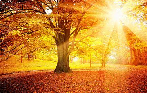 Wallpaper autumn, forest, leaves, the sun, tree, autumn ...