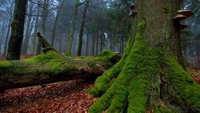 Forest Mysterious 4k Desktop Wallpapers
