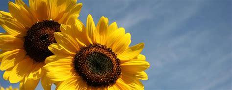 zonnebloem vereniging haarle