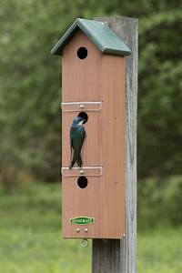 duncraft duncraft sparrow colony nest box