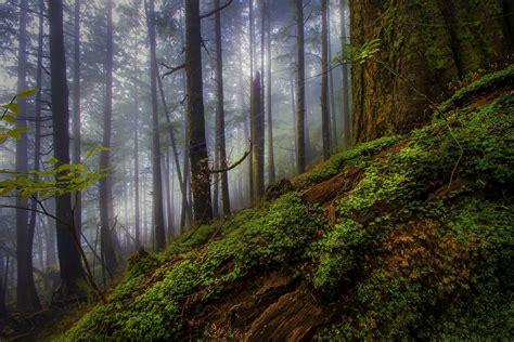 nature landscape morning forest mist shrubs trees