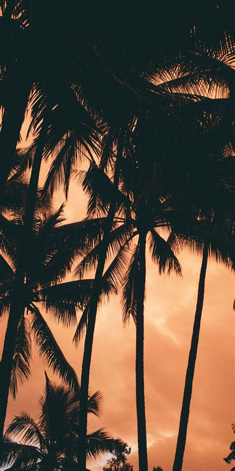 sunset hues  tropical north queensland  noel alva