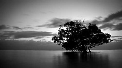 Tree Wallpaper Black And White