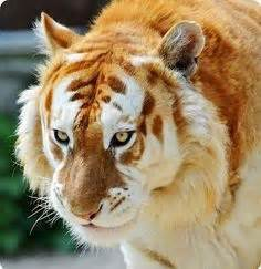 Images About Vary Rare Animals Pinterest Very