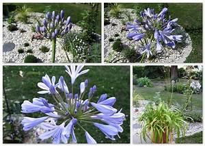 Lavendel Im Topf überwintern : garten im topf ~ Frokenaadalensverden.com Haus und Dekorationen