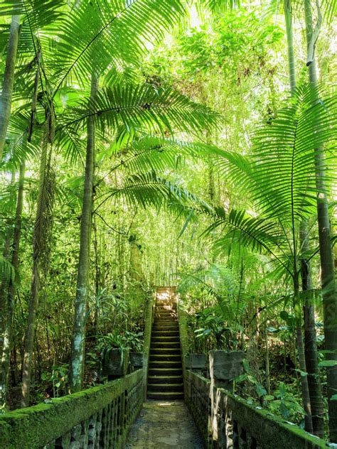 Australia Queensland Steps in rainforest Stock Photo