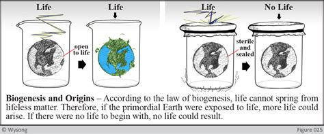 Biogeneses (1) the process in which life forms arise from similar life forms (2). 7. THE LAW OF BIOGENESIS - AsIfThinkingMatters.com