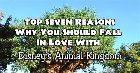 It's A Disney World After All Top Seven Reasons Why You