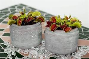 Fleischfressende Pflanzen Kaufen : fleischfressende pflanzen ziehen und pflegen ~ Michelbontemps.com Haus und Dekorationen