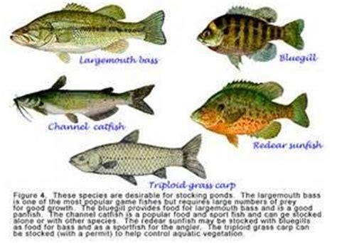 images  types  fish  stock  florida