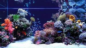Fish Jumping Out Of Aquarium HD desktop wallpaper ...