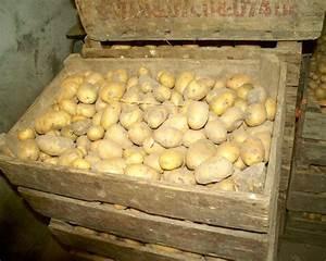 Kartoffeln Aufbewahren Küche : kartoffeln qualit t erkennen und richtig lagern die ~ Michelbontemps.com Haus und Dekorationen