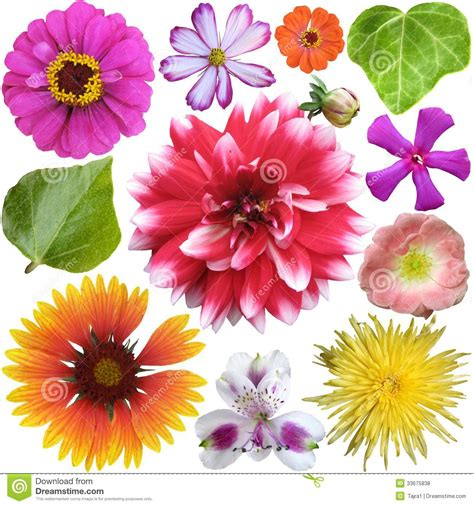 big colorful flowers big selection of colorful flowers stock photo image 33675838