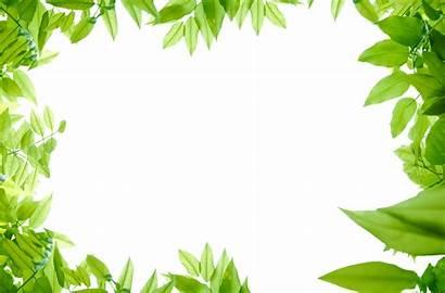 Jungle Border Leaves Transparent Wallpapertip