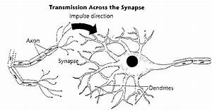 Impulses  Electrical Activity  Always Move From