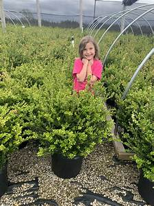 Ready  Set  Grow  Engage Kids With Fun Gardening