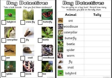 bug identification for ks1 and ks2 science teaching