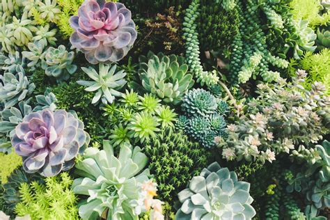 create   succulent container garden  workshop