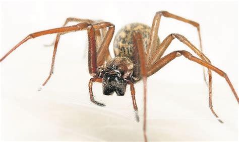 große spinnen im haus was tun spinnen im anmarsch
