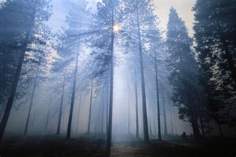 smoke rays   forest fire horizontal landscape