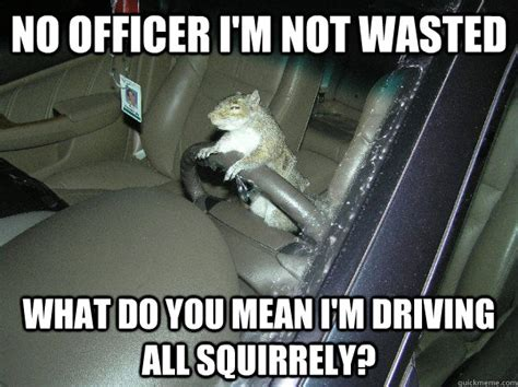 Drunk Driving Meme - 31 most funniest squirrel meme pictures and photos
