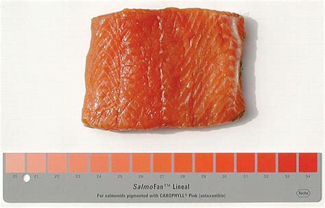 farmed salmon  naturally gray  color added