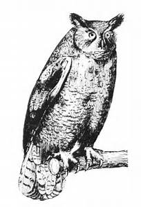 Great Horned Owl clipart halloween - Pencil and in color ...
