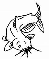 Catfish Channel Coloring Drawings Tocolor sketch template